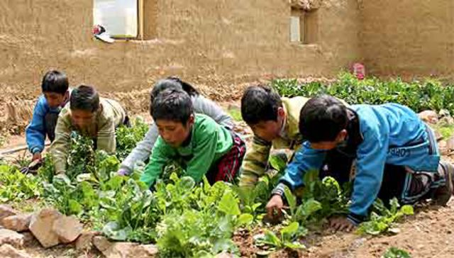 Educational School Gardens for Food Self-sufficiency in Puno