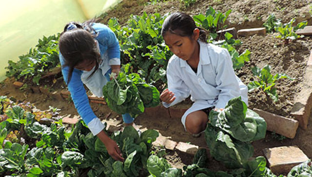 Aymuray Mit'a: School gardens with irrigation systems and canteens